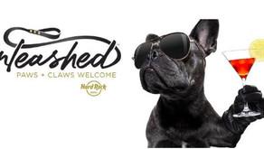 Hospédate con tu mascota en Hard Rock Hotels