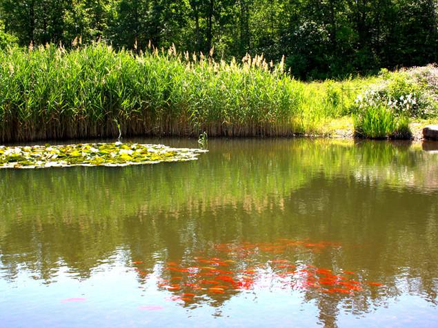 Wassergarten inkl. Beleuchtung