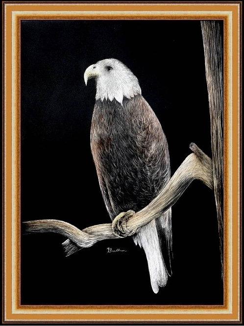 EAGLE IN TREE (SCRATCH BOARD ORIGINAL)