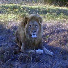 The King at Safari