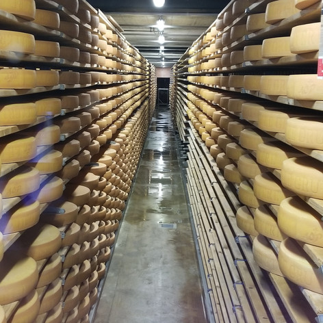 Cheese Storage at Plant in Switzerland