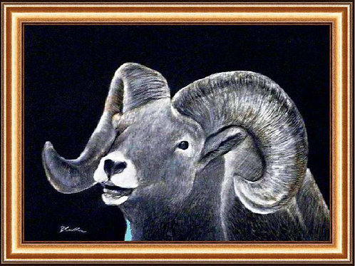 BIG HORN SHEEP (SCRATCH BOARD ORIGINAL)