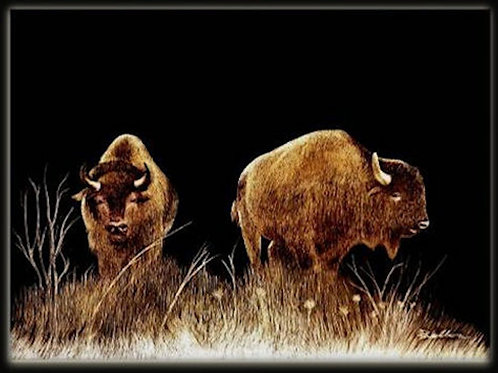 BISON PAIR (LTD PRINT OF / 5)