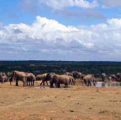 Safari in S Africa