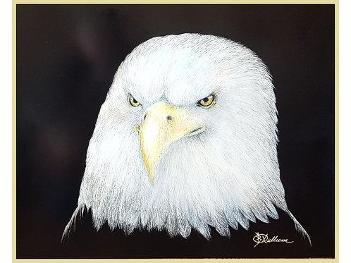 BALD EAGLE (LTD PRINT OF/ 5