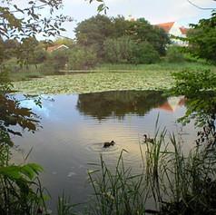 Pond Near Race Hotel in France