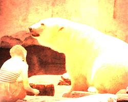 Polar Bear Sunshine