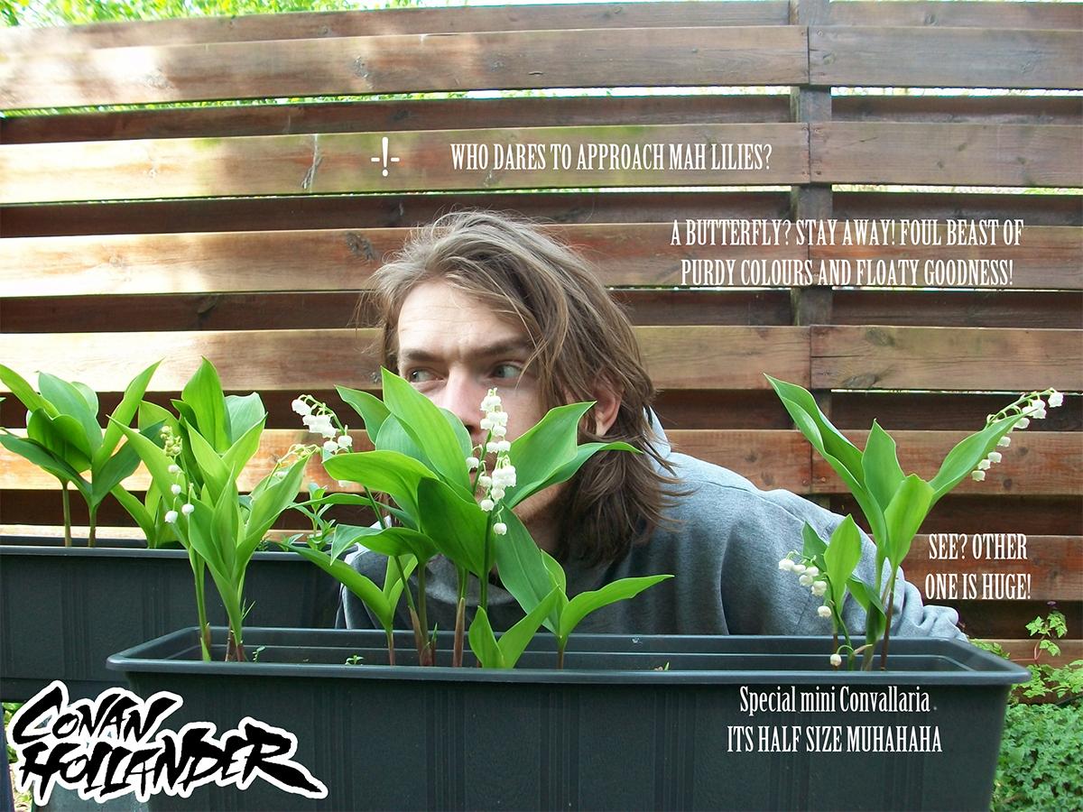 Mah Lilies 1