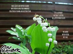 Mah Lilies 5