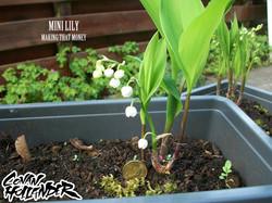 Mah Lilies 4