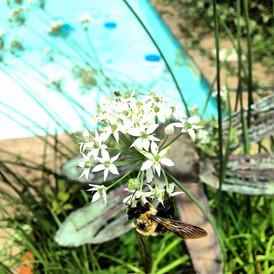 bee flower pool.jpeg