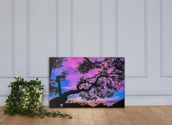 Canvas Live oak Sunset