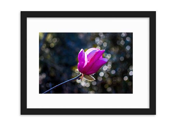 Framed matte paper poster Magnolia 1