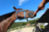 horseback riding branson mo, horse eating a carrot, ranch stables