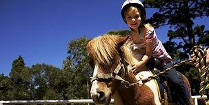 big cedar stables, dogwood canyon, branson kids activities