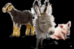 baby goat, baby donkey, baby piglet