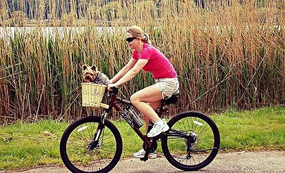 branson mountain bike trails, bike trails branson mo, pet dog riding, carrying basket