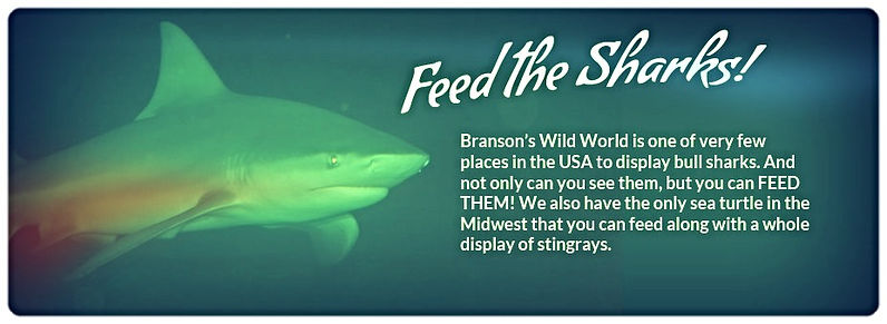 shark feeding, animal feeding, interactive aquarium