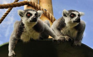 wild world, promised land zoo, lemur cats, cute animals ship