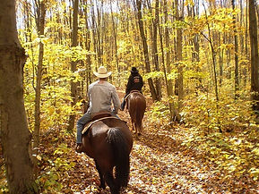 ozark forest, mark twain national forest, horse rental, cattle round up