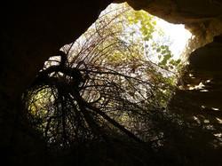 caves near springfield mo