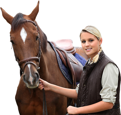 horse rental, local horse lessons,