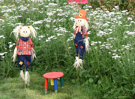 Wildflowers add colour and stimulation to community garden