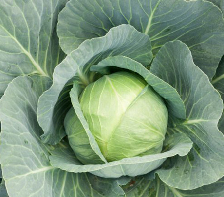 Should you eat Grandma's boiled cabbage?