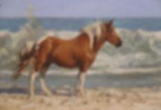 Assateague Pony 5x7.JPG
