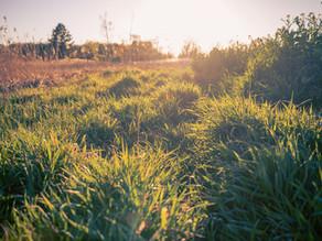 Die Lübarser Felder