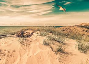 Sommer, Sonne, Strand, Dünen und Möwen