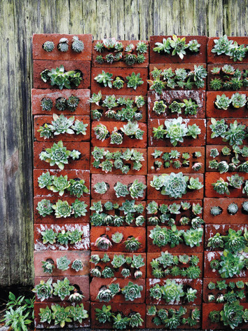 SUCCULENTS GROWING FROM OLD BRICKS