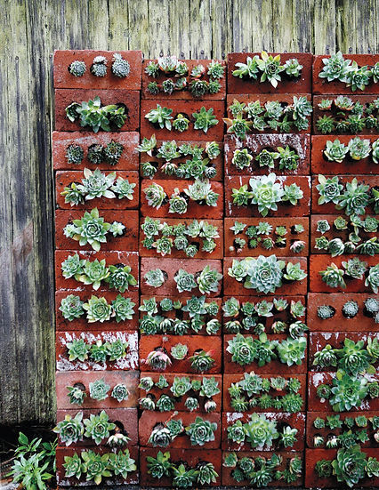 Recycled bricks used in garden wall feature to house succulents