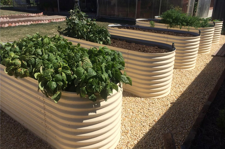 vegtables in Raised garden bed