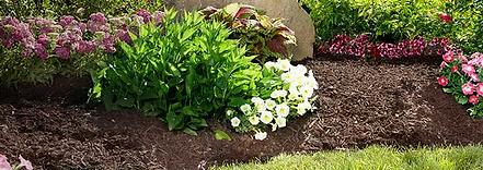 Freshly mulced garden bed with bush mulch