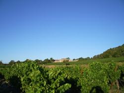 vue sur les vignes.JPG