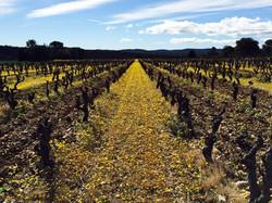 Nos vigne en hiver