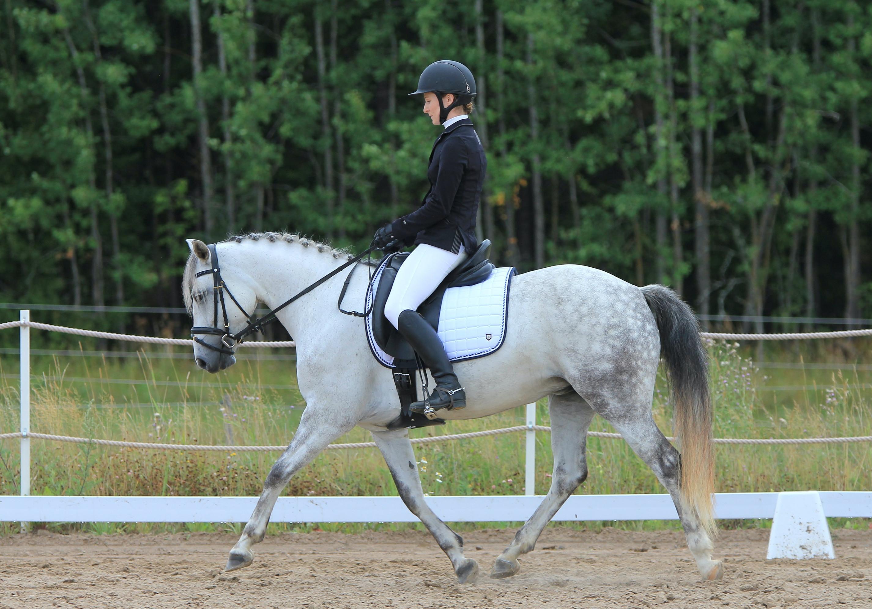 Horsemanship & Dressage