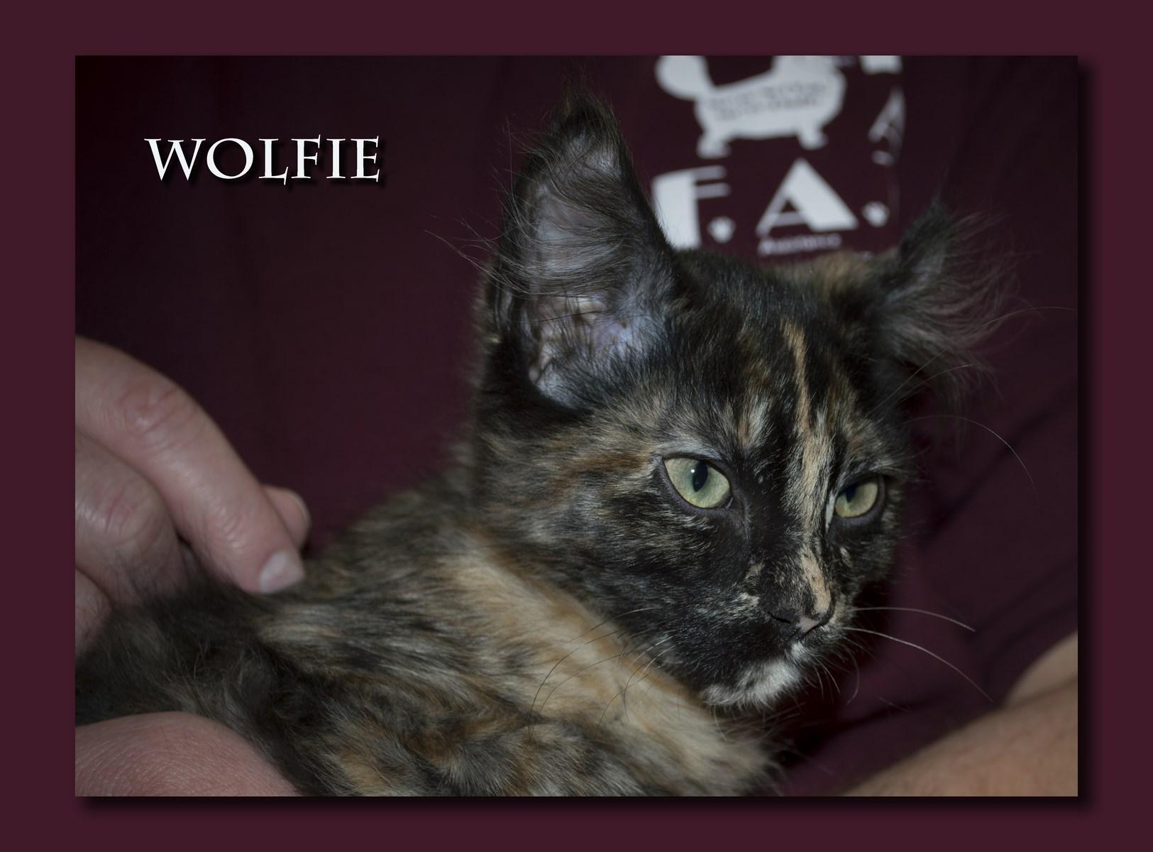 Wolfie+(Copy).jpg