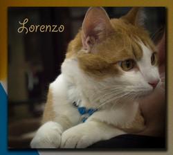 Lorenzo5+(Copy).jpg