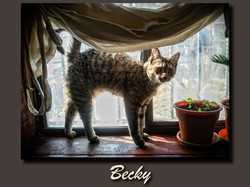 Becky+window+taupe.jpg