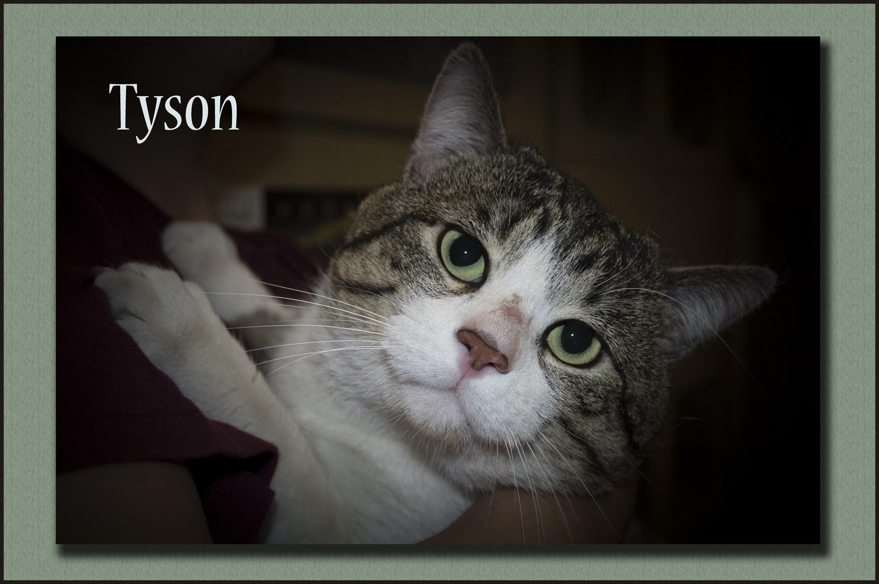 Tyson1+(Copy).jpg