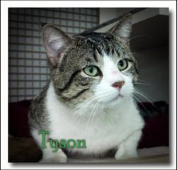 Tyson+close+up-.jpg