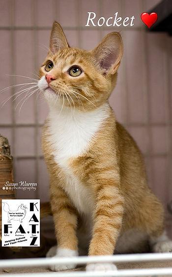 Cat Rescue in Albuquerque, Albuquerque Cat rescue