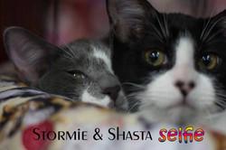 stormie & shasta.jpg