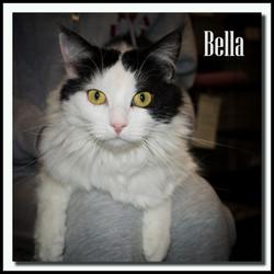 Bella3+(Copy).jpg
