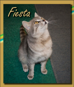 Fiesta+(Copy).jpg