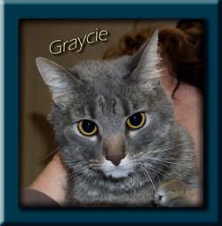 Graycie+(Copy).jpg
