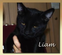 Liam-+(Copy).jpg