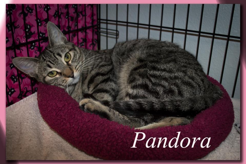 pandora10.jpg